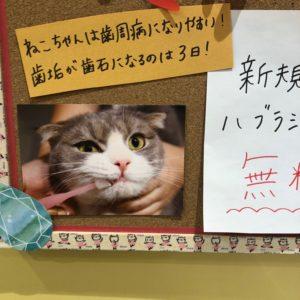 都島区にネコちゃん専門店とビバテック!