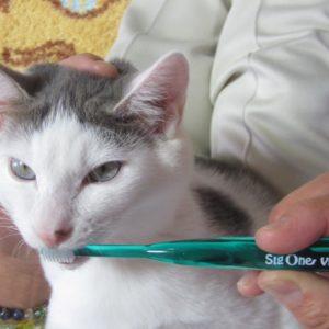 ビバテック歯ブラシでワンちゃんやネコちゃんの大切な歯を守ろう